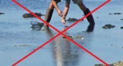 Interdiction ramassage et pêche coquilllages filtreurs